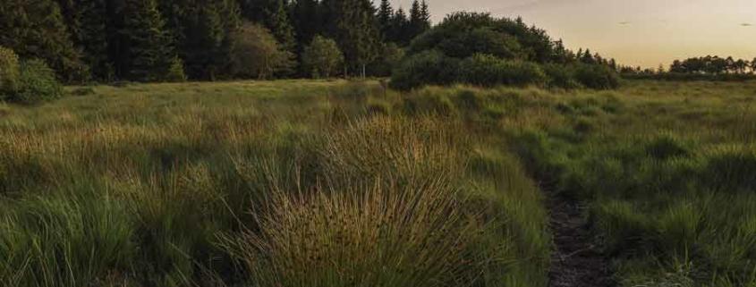 Natur Moor