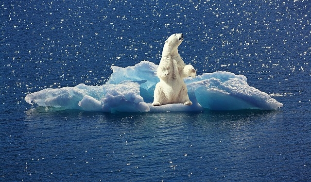 Klimawandel Eisbär